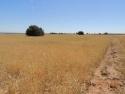Wheat Zone C