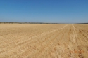 Harvested Zone B