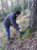 UVA technician taking dendrological samples to calculate age of the mass