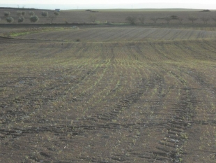 Land preparation to start with planting cover crops in San Mateo de Gállego
