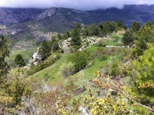 Productive plantation visit in Alinyà