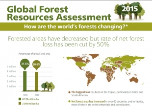 Global Forest Resources Assessment - FAO