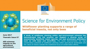 Wildflower planting supports a range of beneficial insects, not only bees