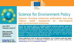 Organic farming enhances pollination but may reduce yield compared to non-organic agri-environment schemes