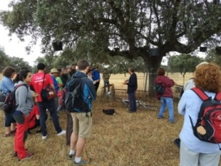 Field trip during the Spanish Forestry Congress in Plasencia